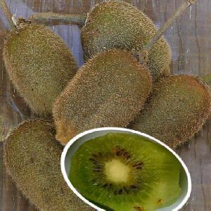 Kiwi 'Solissimo' (Auto-fertile)