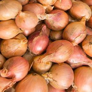 OIGNON Rosé d'Armorique