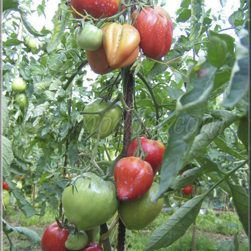 Légumes & aromatiques BIO